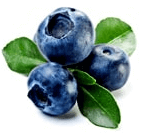 blue berry fruit name in hindi