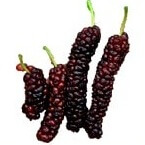 mulberry fruit name in hindi