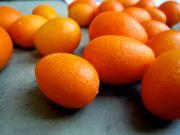 kumquat fruit name in hindi